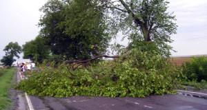 copac cazut pe masina Şeica Mică