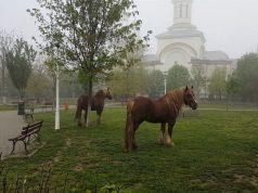 doi cai