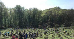 plantare puieți
