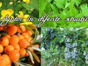siropuri şi vinuri tonice din plante medicinale