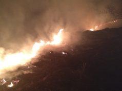 Incendiu uriaș de vegetație
