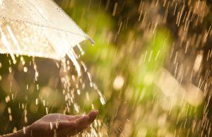 cod galben de ploi mediaș