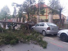 copac căzut
